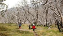 Mountain walks